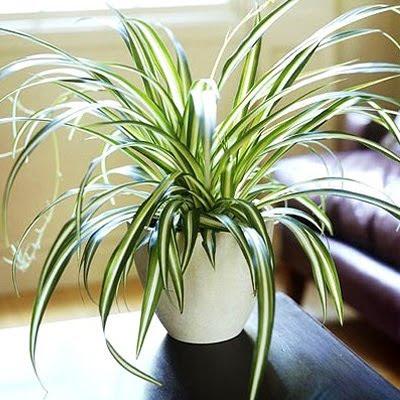 Yesterday Today Tomorrow Top 10 Indoor Plants