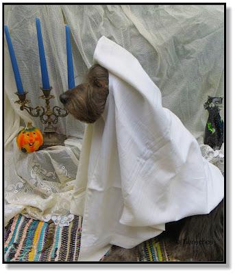 Halloweenkostüm für Hunde