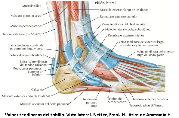 Esguince de tobillo y acupuntura - Dolor crónico | Acupuntura y ...