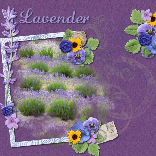 https://www.mymemories.com/store/product_search?term=provence+lavender+(adbd)
