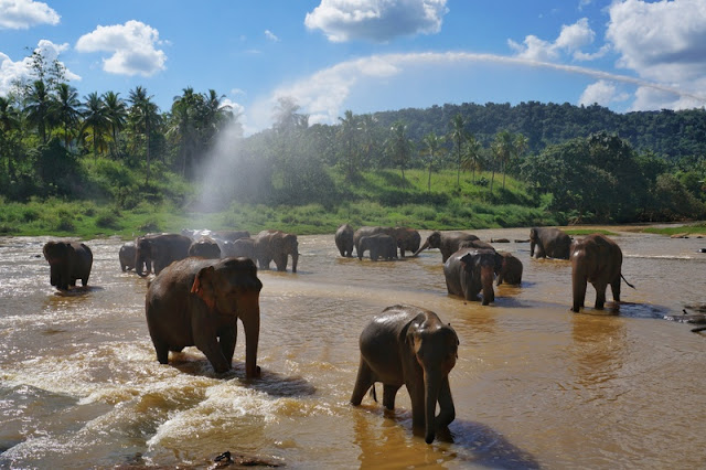 Orfanato de Elefantes de Pinnawela no Sri Lanka: a nossa experiência