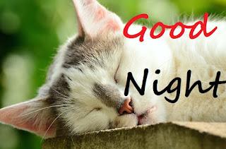 cute good night cat