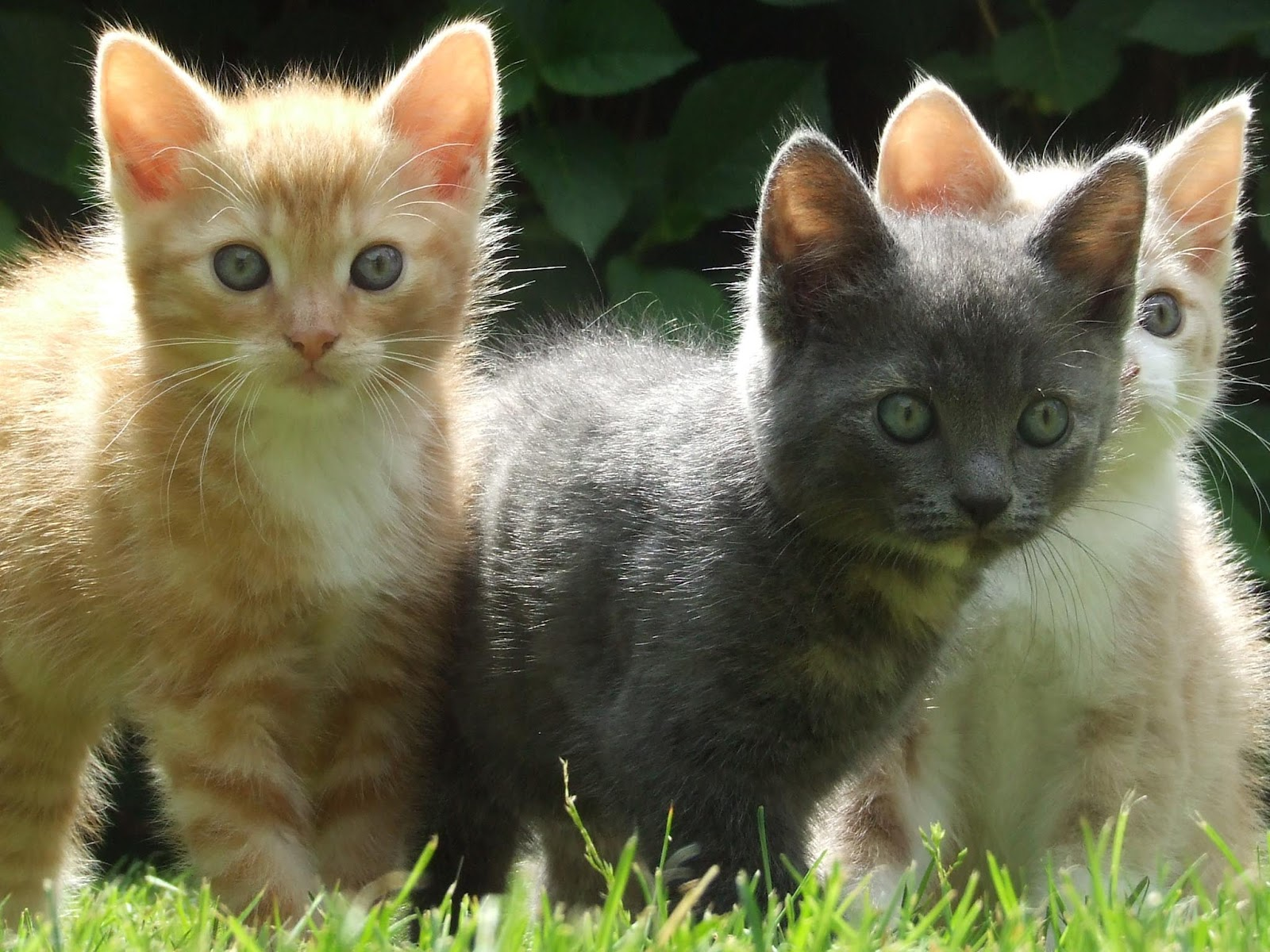 Kittens Wallpapers Pets Cute And Docile