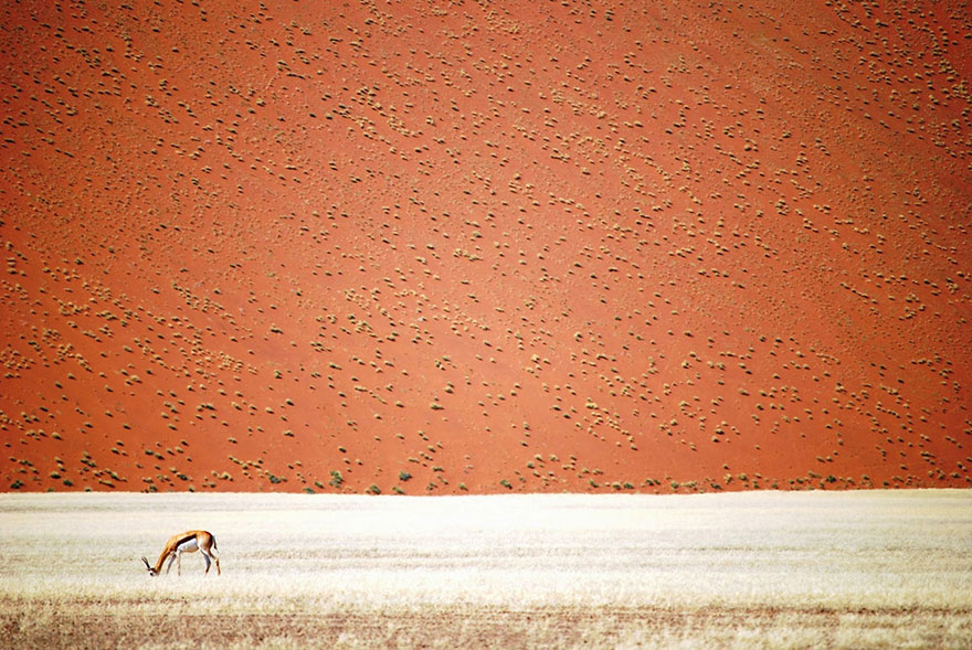 These Are The 35 Best Pictures Of 2016 National Geographic Traveler Photo Contest - Namibian Desert, Namibia