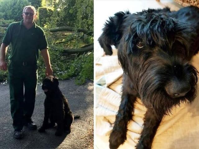 Собака спасла своего хозяина от падающего дерева за секунды