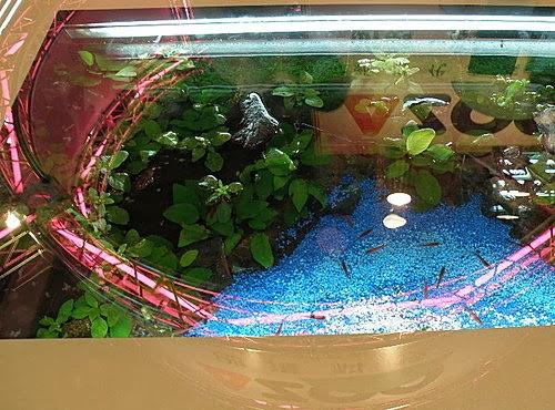 金魚快訊部落格Goldfish message blog: 2010臺灣觀賞魚博覽會(10月29日~11月1日)---參展攤位巡禮