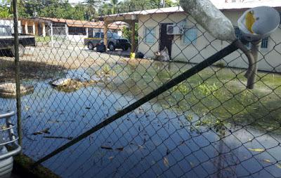 sistema septico colapsado por el agua