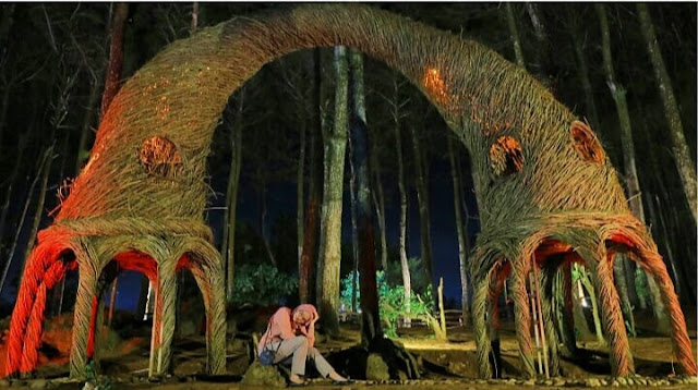 keindahan hutan pinus pengger, lokasi hutan pinus pengger, rute hutan pinus pengger, htm hutan pinus pengger, spot cantik hutan pinus pengger, hutan pinus pengger jogja, sejarah hutan pinus pengger, hutan pinus pengger bantul jogja, tiket masuk hutan pinus pengger bantul 2020, harga tiket masuk hutan pinus pengger 2020, perbedaan hutan pinus pengger dan mangunan, pantai dekat hutan pinus pengger, jarak hutan pinus pengger ke malioboro, wisata dekat hutan pinus pengger, tiket masuk hutan pinus pengger 2020