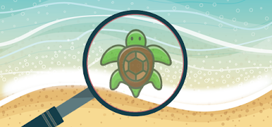 Spot the Turtle Quiz Answers