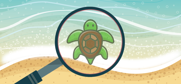 spot the turtle quiz answers 100% score quiz diva quiz