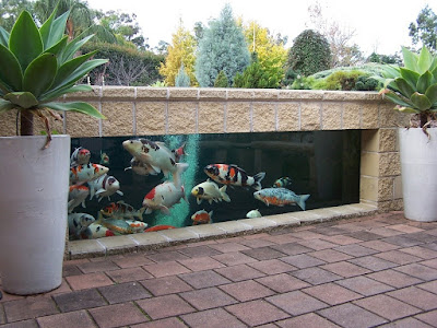 Kolam Ikan Minimalis Gaya Akuarium Outdoor