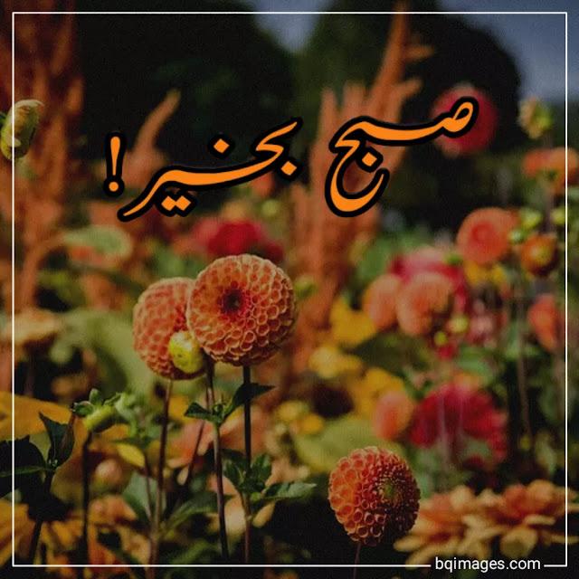 assalamu alaikum subha bakhair