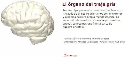 http://www3.gobiernodecanarias.org/medusa/contenidosdigitales/programasflash/Conocimiento/Cuerpo/Partes/cerebro.swf