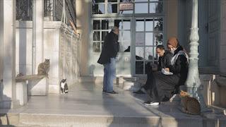 """طلبا للدفء شتاء.. قطط إسطنبول تلوذ بجامع """"يحيى أفندي""""(فيديو)"""