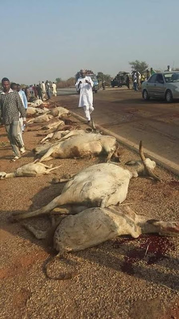 Gridlock as truck smashes cattle to death along Keffi-Abuja expressway [PHOTOS]