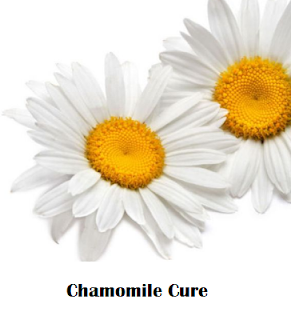 How to use chamomile as a home remedy for common cold
