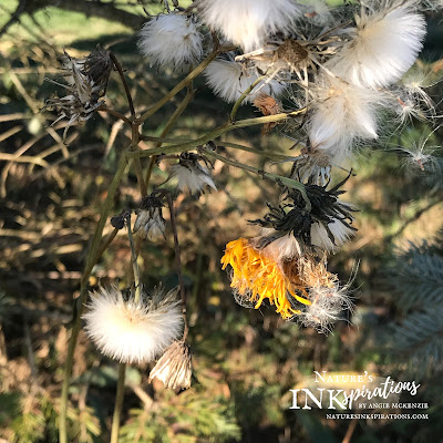 Dandelion Inspiration for aWOW Blog Hop January 2021 | Nature's INKspirations by Angie McKenzie