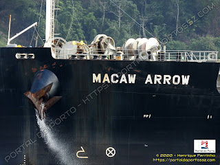 Macaw Arrow