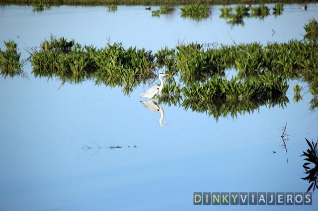 Garza en la marisma de Doñana