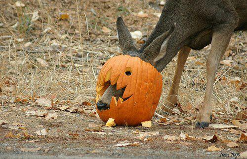Deer New Funniest Photographs Funny And Cute Animals