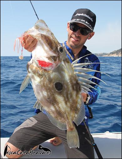 gallo graphiteleader protone daiwa pirates pesca costa brava jjpescasport 5 - De los 0 a los 100 metros, SPINNING y JIGGING!