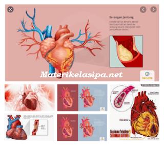 Ketahui 4 Klasifikasi Penyakit Jantung Mulai Sekarang
