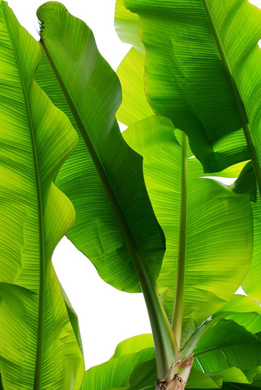 Greenery Pantone Colour of the Year 15-0343 Tropical Leaves