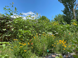 Sunflowers with Wildflowers