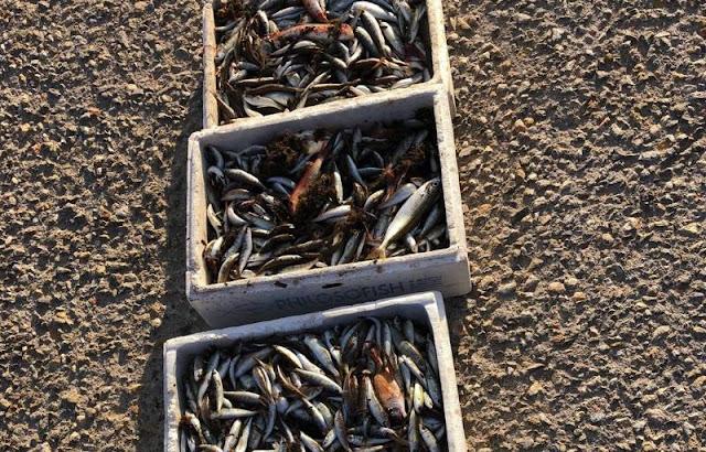 Κατασχέθηκαν 27 κιλά αλιεύματα στην Αργολίδα λόγω παράνομης αλιείας
