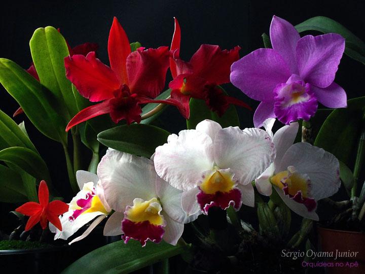 Orquídeas: O Guia Definitivo