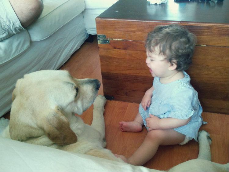 Perro Labrador y bebé