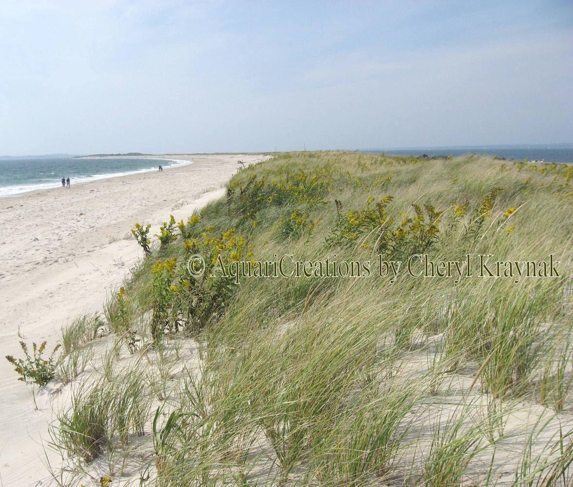Rhode Island Beaches: Windswept At The Beach: Indian Summer Adventure In Watch