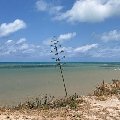 planta se destacando das outras à beira do mar