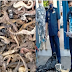 Negros Occidental seizes over 10 kilos of dried seahorses worth P460,000