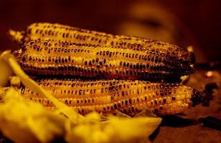 فوائد الذرة المشوي