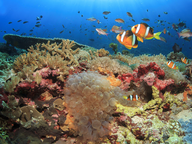 Gili Air Lombok : Daya Tarik  dan Keindahan Wisata Pulau Mungil