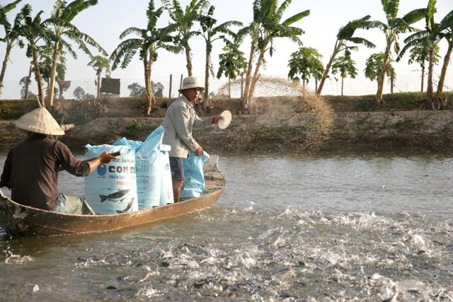nhập khẩu thức ăn thủy sản, sản phẩm xử lý môi trường