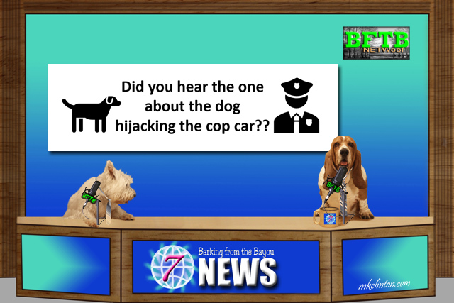 BFTB NEWoof News desk with two dogs