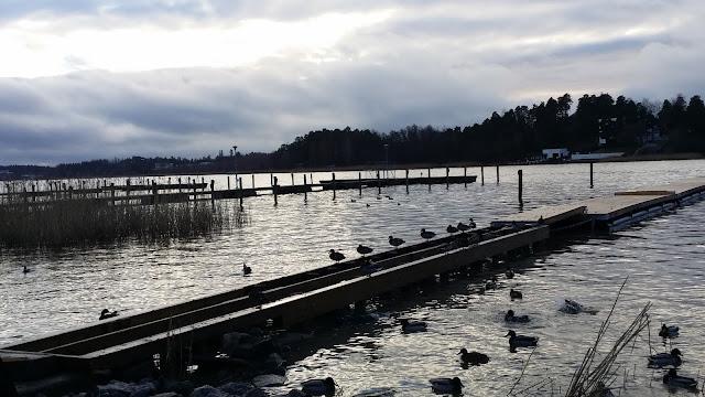 sorsat, ranta, venelaituri, Kuusistonsalmi, Turku, kaislat