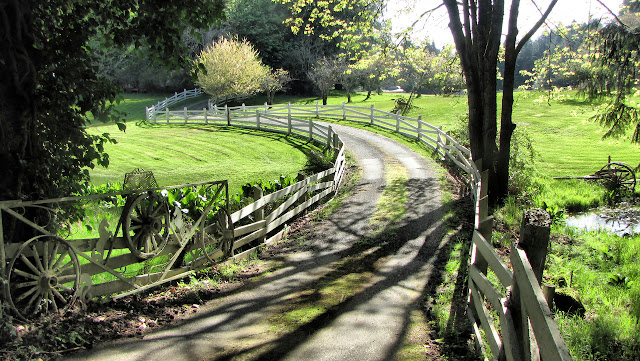 The sun over a bucolic country lane in rural Saanich BC...