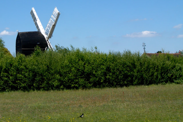 Windmill and magpie