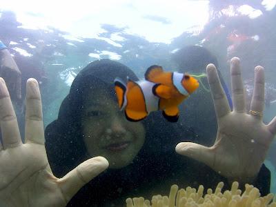 Finding Nemo di Pulau Tikus