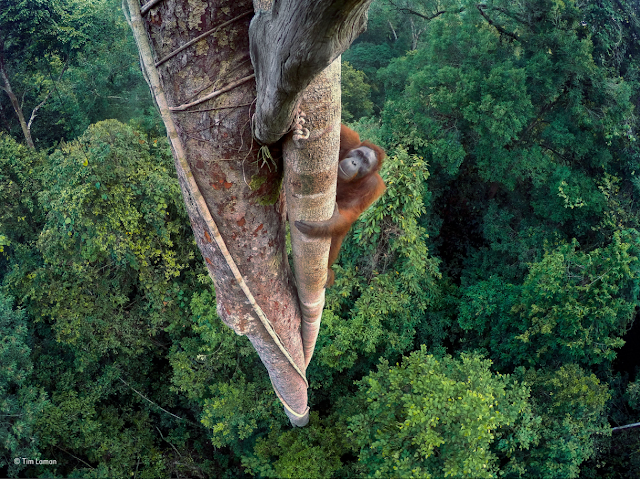 Prêmio Wildlife Photographer of the Year 2016