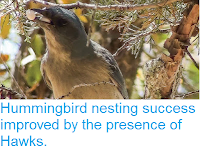 https://sciencythoughts.blogspot.com/2015/09/hummingbird-nesting-success-improved-by.html