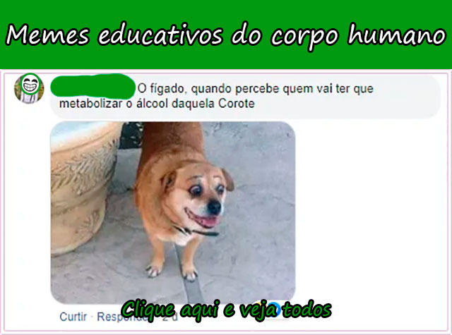MEMES EDUCATIVOS DO CORPO HUMANO