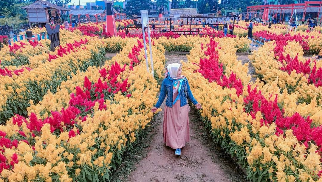taman bunga celosia springhill palembang