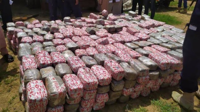 Drug Bust: NDLEA Seizes N50m Worth Of Tramadol Capsules