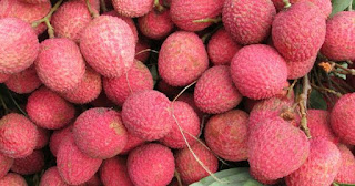 shai-litchi-was-exported-to-britain