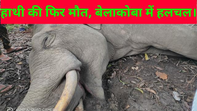 हाथी की फिर मौत, बेलाकोबा में हलचल।