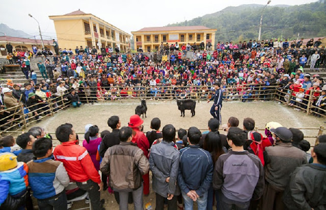 Goat fighting festival in Ha Giang 3